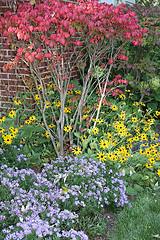 upright flowers
