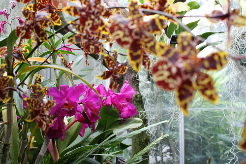 tiger and purple orchids