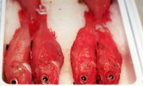Tokyo's Tsukiji FishMarket